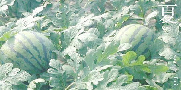 夏の果物(スイカ)の写真